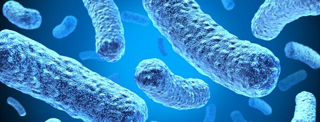 Entdeckung neuer Mikroorganismen im Darm – Wirksame Alternative für Antibiotika?