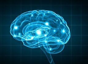 Parkinson: Beginnt die Krankheit vielleicht im Darm?